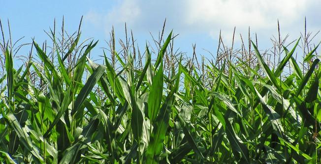 Капельное орошение зерновых и технических культур